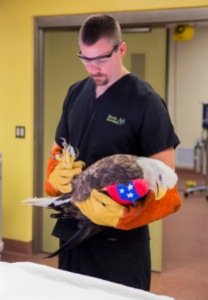 BALD EAGLE RESCUE-SURGERY AT BUSCH GARDENS TAMPA_01