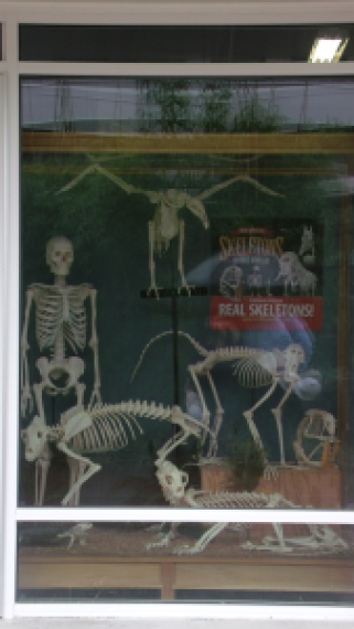 Skeletons pre-opening window display. Can you name these creatures?